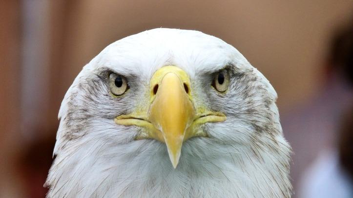 white-tailed-eagle-416795_960_720