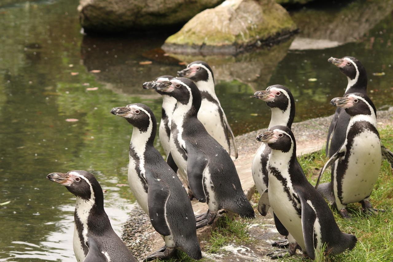 penguin-2240540_1280.jpg