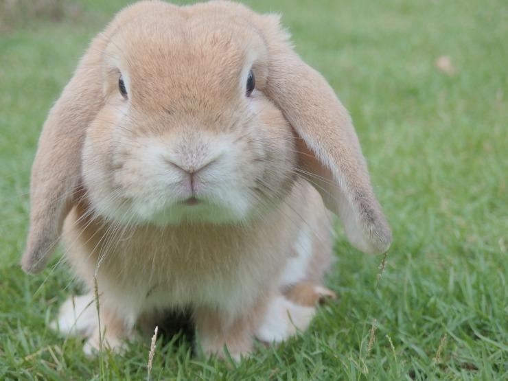 bunny-1149060_1280.jpg