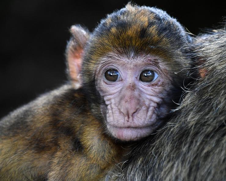monkey-2790452_1280.jpg