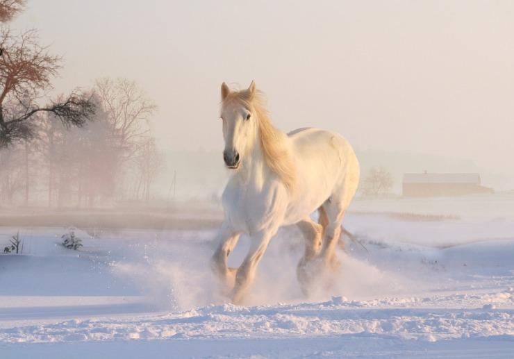 white-horse-3010129_1280.jpg